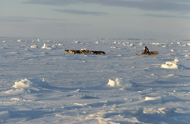 Tatigat, an Inuit hunter on his dogsled, crosses sea ice near Igloolik. Nunavut. Canada.