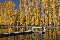 autumn wharf, central otago, new zealand, poplar trees, wharf, autumn