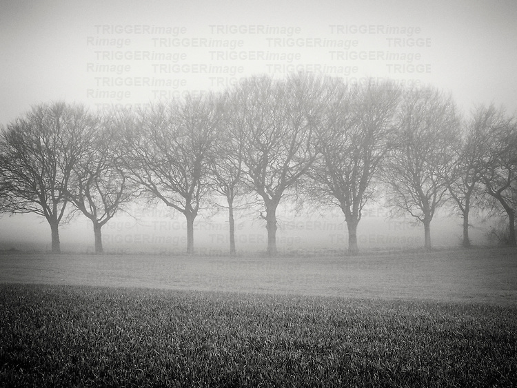 Foggy landscape scene with trees with bare branches