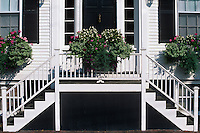 Stairs with flowers in planter