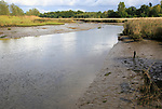 Tidal reedbeds River Deben, upstream from Wilford Bridge,  Melton, Suffolk, England, UK