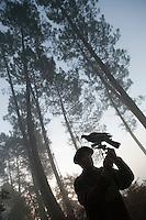 Europe/France/Aquitaine/40/Landes/Escalans:Avec Jean Barrère à  sa Palombière de la Ganaderia de Buros - Installation des appelants ou appeaux  <br /> -La publication de cette image doit etre faite en accord avec le contenu et le contexte de sa légende - The use of this image must be made in agreement with the content and the context of it caption