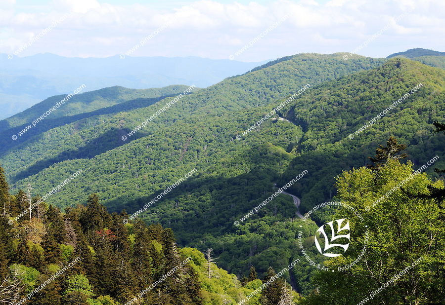 Stock image of the new found gap road in Smoky mountain national park, America.