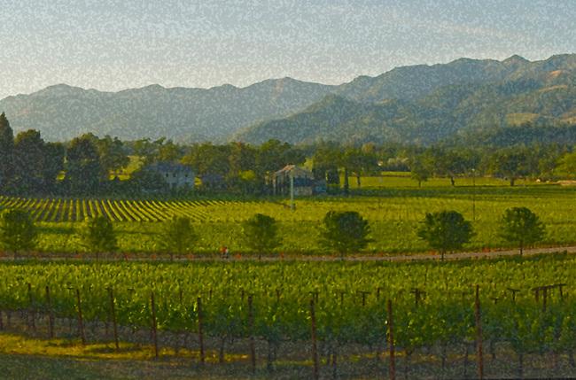 Mosaic image of Napa Valley vineyards