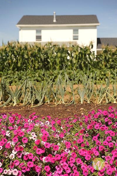 Nippenose Valley. Amish farmhouse and frontyard garden.