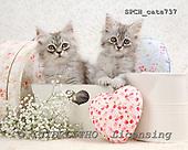 Xavier, ANIMALS, cats, photos+++++,SPCHCATS737,#a# Katzen, gatos