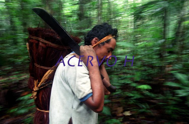 """Índios Werekena da comunidade de Anamoim no alto rio XiÈ, trabalham com a piaçava (LeopoldÌnia pÌassaba Wall). <br /> A  árvore normalmente aloja os mais variados tipos de insetos representando um grande risco aos Ìndios durante sua coleta . A<br />  fibra  um dos principais produtos geradores de renda na regi""""o È  coletada de forma rudimentar. AtÈ hoje È utilizada na fabricaÁ""""o de cordas para embarcaÁıes, chapÈus, artesanato e principalmente vassouras, que s""""o vendidas em v·rias regiıes do paÌs.<br /> Alto rio XiÈ, fronteira do Brasil com a Venezuela a cerca de 1.000Km oeste de Manaus.<br /> 06/06/2002.<br /> ©Foto: Paulo Santos/Interfoto<br /> Negativo Cor N∫ 8328 T3 F14a"""