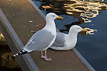 Leiden in Holland, the Netherlands, .  John leads private, wildlife photo tours throughout Colorado. Year-round.