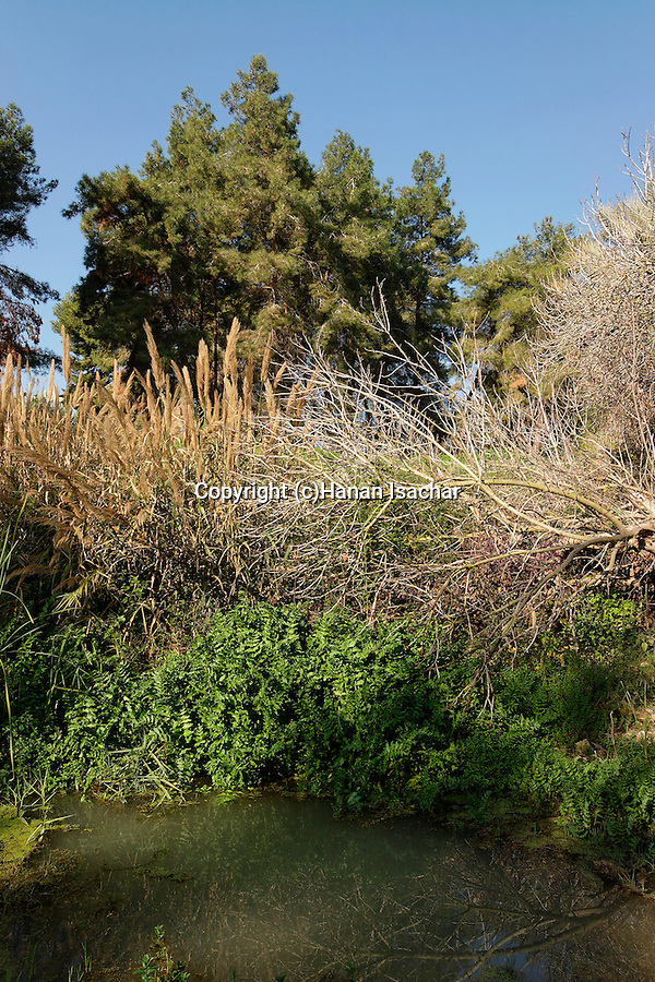 Israel, Keini stream in Menashe Heights