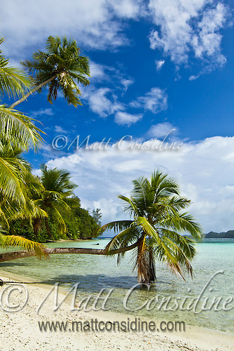 Ideal tropical beach with palm trees, Palau Micronesia. (Photo by Matt Considine - Images of Asia Collection) (Matt Considine)