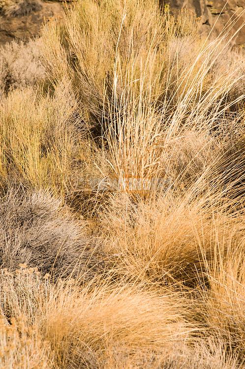 Close-up of wild grass.