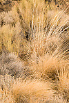 Close-up of wild grass.