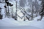 Kicking Horse B.C. and Parlor Skis