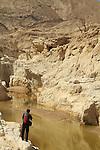 Shayish waterholes in Wadi Zin