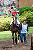 Respectful Wishes before The White Clay Creek Stakes at Delaware Park on 7/25/13