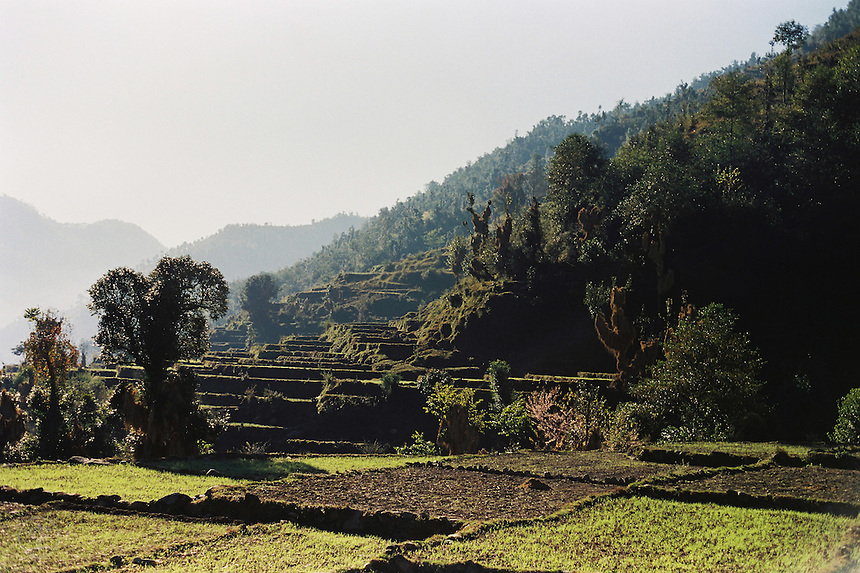 Terraced fields in the Himalayan foothills near Terhi Garhwal, India.