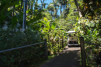 A tourist gets a ride via golf cart at the Hawaii Tropical Botanical Garden in Papa'ikou, just north of Hilo, Big Island of Hawai'i.