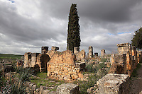 Ruins of an oil producing house in the South East quarter of the city, Volubilis, Northern Morocco. Volubilis was founded in the 3rd century BC by the Phoenicians and was a Roman settlement from the 1st century AD. Volubilis was a thriving Roman olive growing town until 280 AD and was settled until the 11th century. The buildings were largely destroyed by an earthquake in the 18th century and have since been excavated and partly restored. Volubilis was listed as a UNESCO World Heritage Site in 1997. Picture by Manuel Cohen