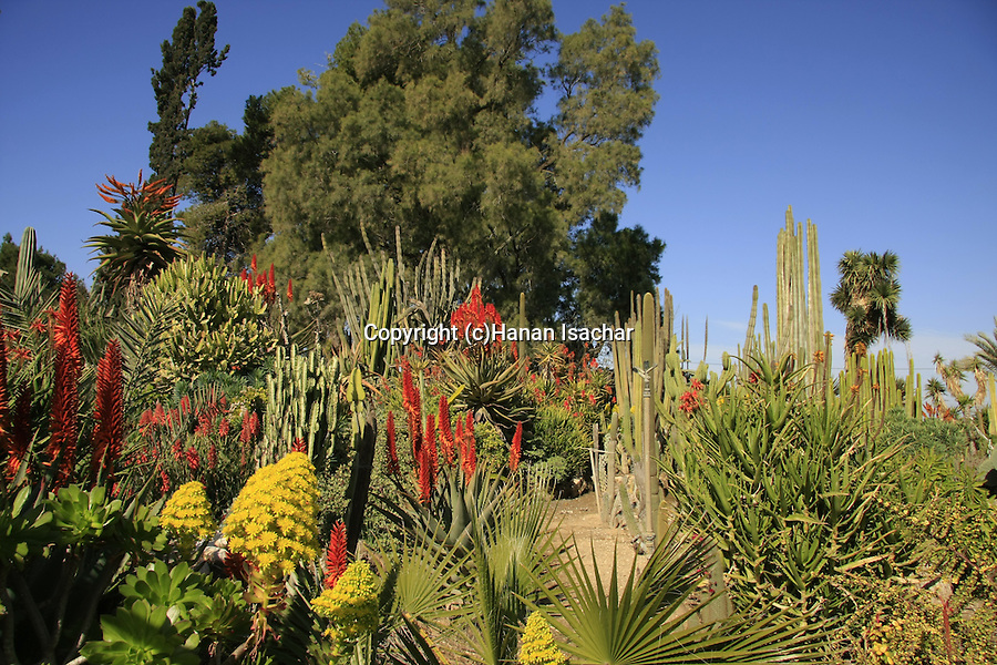 Israel, Northern Negev. The Cactus Garden in Kibbutz Saad