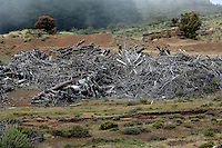 Wood pile cleared from forest, El Hierro, Canary Islands,Spain.