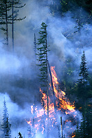 USFS Controlled Burn Forest Fire.  Flathead National Forest, Montana.