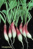 HS32-003b  Radish - tap root - D'Avignon variety