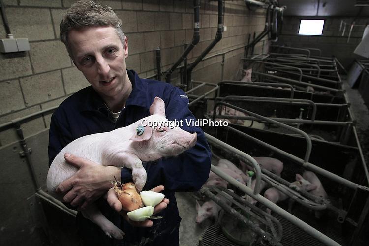 Foto: VidiPhoto..RAVENSWAAIJ - Biggen zijn net kinderen, vindt varkensfokker Ronald Vernooij uit Ravenswaaij. En daarom krijgen deze kritische fijnproevers de lekkerste hapjes, die de varkenshouder zelf bedenkt. Vanaf woensdag wordt door de Betuwse varkenshouder ui aan het menu toegevoegd, wat goed is voor de darmen van de dieren. Al eerder voegde Vernooij met succes suiker, roosvice en cola toe aan het varkensdiner. Met succes. De biggen groeien beter, zijn een stuk fitter en zien er gezonder uit. Het volgende experiment is knoflook. Vernooij bezit 2000 vleesvarkens en 480 fokzeugen..