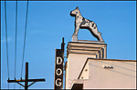 Vintage sign for Dog and Cat Hospital in Hollywood, CA