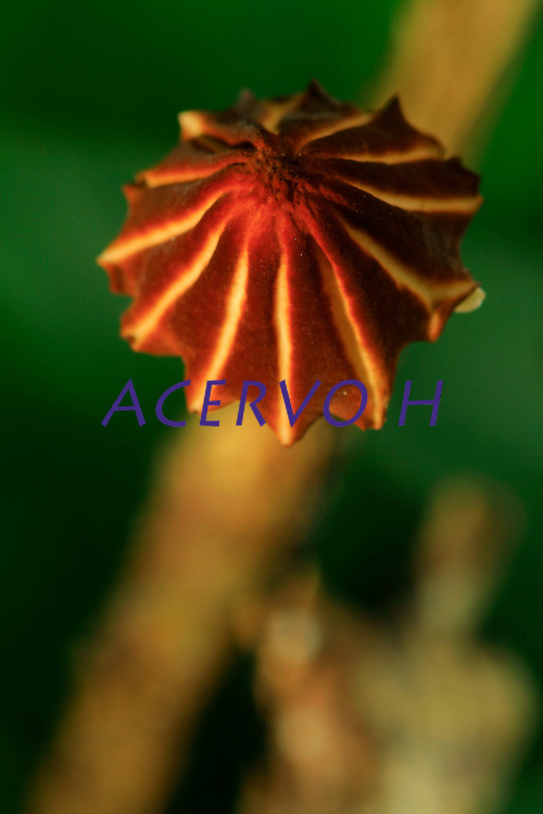 Plantas, fungos flores e frutos<br /> Fotos Carlos Borges