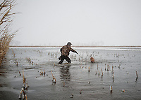 Pat Berggren (cq) and his dog fetch duck after a kill during a hunting trip just off the duck-rich Platte River in Nebraska, Saturday, December 3, 2011...Photo by Matt Nager