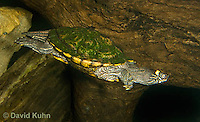 0215-1104  Ouachita Map Turtle Swimming Underwater (Sabine Map Turtle), Graptemys ouachitensis  © David Kuhn/Dwight Kuhn Photography