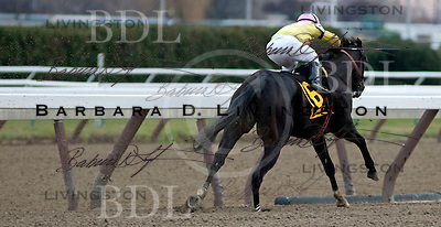 Cigar Mile day at Aqueduct 11-29-14