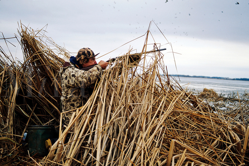 A duck hunter in camouflage gear aims his rifle from behind a duck hunting blind.