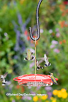 01162-12418 Ruby-throated Hummingbirds (Archilochus colubris) at feeder by flower garden, Marion Co.  IL