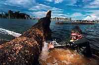 O MERGULHADOR/OPERADOR DE MOTOSSERRA BENEDITO SIDNEY, corta a ponta podre da tora de madeira retirada do fundo do lago de Tucuruí formado com a construção da hidrelétrica. Os mergulhadores chegam a mergulhar até 30 mts para a retirada de novas toras que se mantiveram conservadas na água.<br /> Tucuruí, Pará, Brasil<br /> FOTO: ©PAULO SANTOS<br /> 27/04/2000.