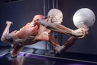 A siliconized human body is seen on display on the Human Body exhibition in Budapest, Hungary on March 26, 2012. ATTILA VOLGYI