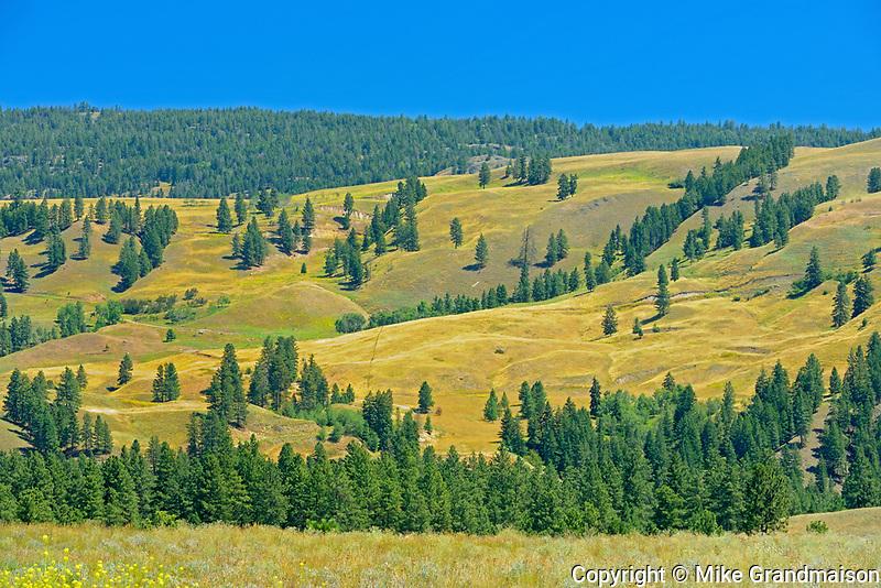 Rangeland, Near Princeton, British Columbia, Canada