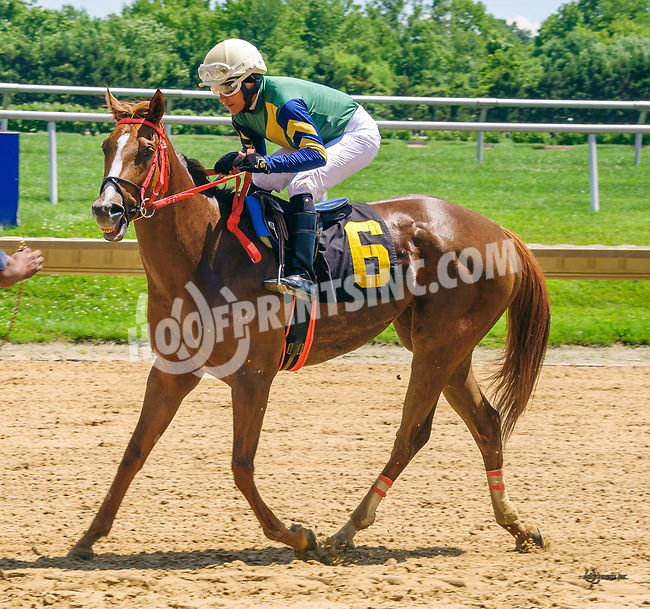 Jezzie winning at Delaware Park on 6/2417