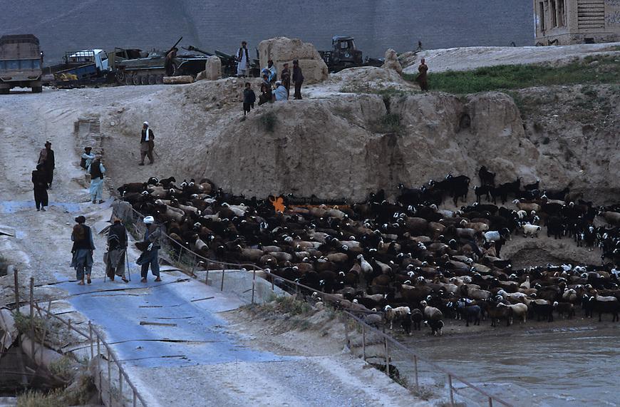 Sheeps flock crossing the bridge of Bala Murghab