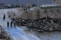 Sheeps flock crossing the bridge of Bala Murghab