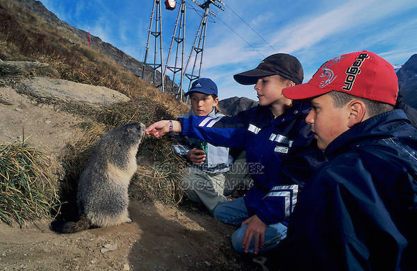 Alpine Marmot, Marmota marmota, kids feeding marmots with carrots, Saas Fee, Switzerland, September 2003