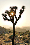 Joshua Tree National Monument in California