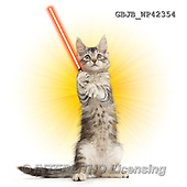 Kim, ANIMALS, REALISTISCHE TIERE, ANIMALES REALISTICOS, fondless, photos,+Silver tabby kitten, Loki, 11 weeks old, with light sabre,++++,GBJBWP42354,#a#