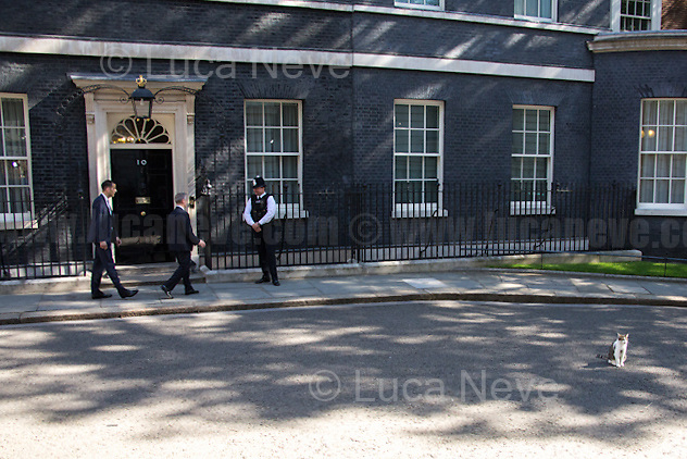 Larry (10 Downing Street cat and Chief Mouser to the Cabinet Office).<br /> <br /> London, 19/07/2016. First Cabinet meeting at 10 Downing Street (after the EU Referendum and consequent David Cameron's resignation) for the new Prime Minister Theresa May and her newly formed Conservative Government.<br /> <br /> For more information about the Cabinet Ministers: https://www.gov.uk/government/ministers