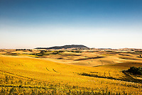 The late afternoon sun throws shadows over a landscape more like a golf course than active farm land. Scattered copses of trees. Kamiak Butte lies in the distance while the Town of Palouse is hidden among the hills.