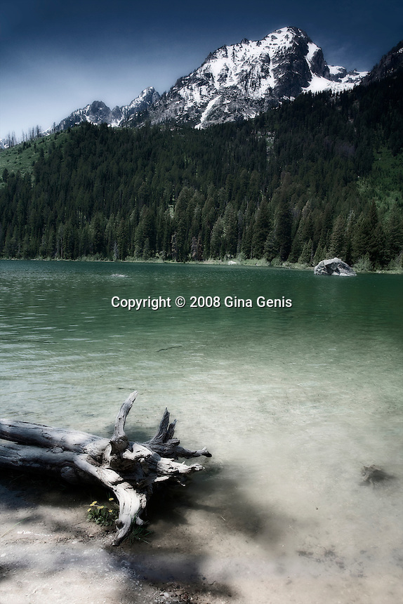 String Lake with log, Grand Tetons photographed by Gina Genis