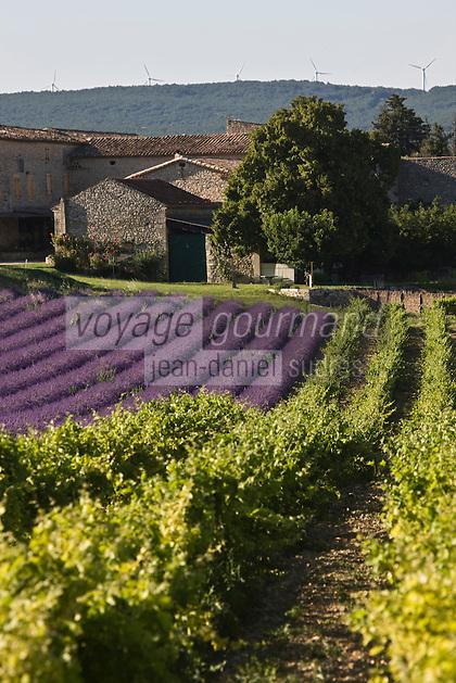 Europe/France/Rhône-Alpes/26/Drôme/Env de Grignan: Champ de Lavande, vignoble du Tricastin  et  Habitat provençal