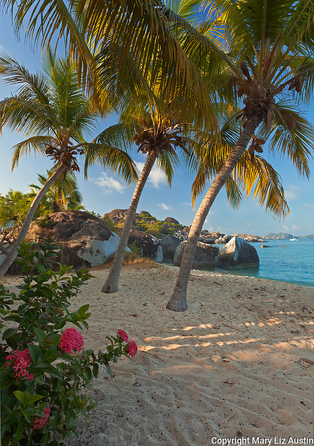 Virgin Gorda, British Virgin Islands, Caribbean <br /> Red flowering Jungel geranium (Ixora coccinea) and palm trees lean towards the beach on Spring Bay, Spring Bay National Park