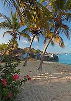 Virgin Gorda, British Virgin Islands, Caribbean <br /> Red flowering Jungel geranium (Ixora coccinea) and palm trees lean towards the beach on Spring Bay, Spring Bay National Park