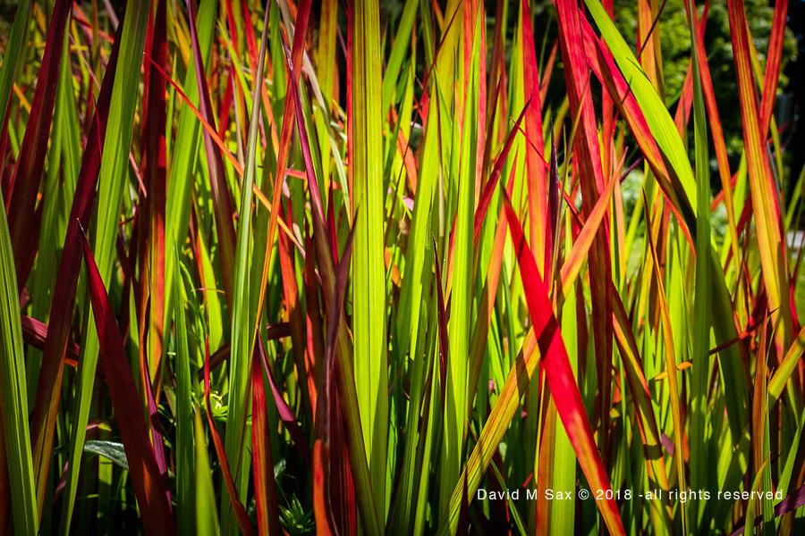 7.4.17 - Grass Contrast...